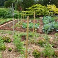 Silence ça pousse au jardin...