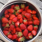 Les premières fraises du jardin du mois de mai, un délice...