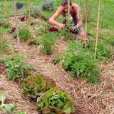 Tout va très vite avec la pluie et la chaleur, les tomates commencent de s'éveiller.