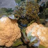 Chou fleur et brocolis du potager, une salade bien fraiche en perspective!