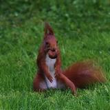 Au domaine nous avons des écureuils qui partagent notre vie.