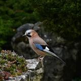 Chez nous les oiseaux sont rois et la nature est reine...