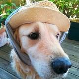Notre meilleur ami se protège du soleil...