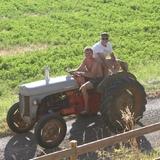 Tour de mon tracteur Fergusson avec un vacancier...