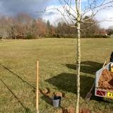 Nous avons planté plus de 800 végétaux dans le domaine.