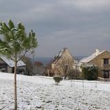 Notre pin parasol passe son premier hiver.