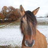 Nos voisins, les chevaux.