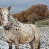 A coté du domaine, les chevaux.