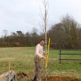 Plantation de 4 grands tulipiers de Virginie au domaine.