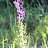 Les curieuses fleurs sauvages du domaine.