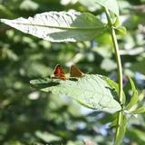 Nous protégeons les insectes et ne traitons pas nos cultures.